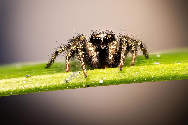 spider by Hans van Voorst