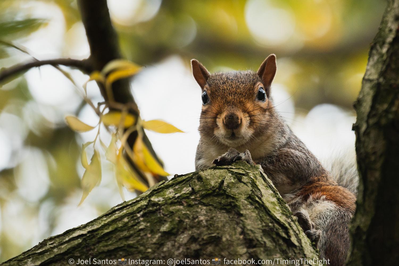 I'm watching you! by Joel Santos