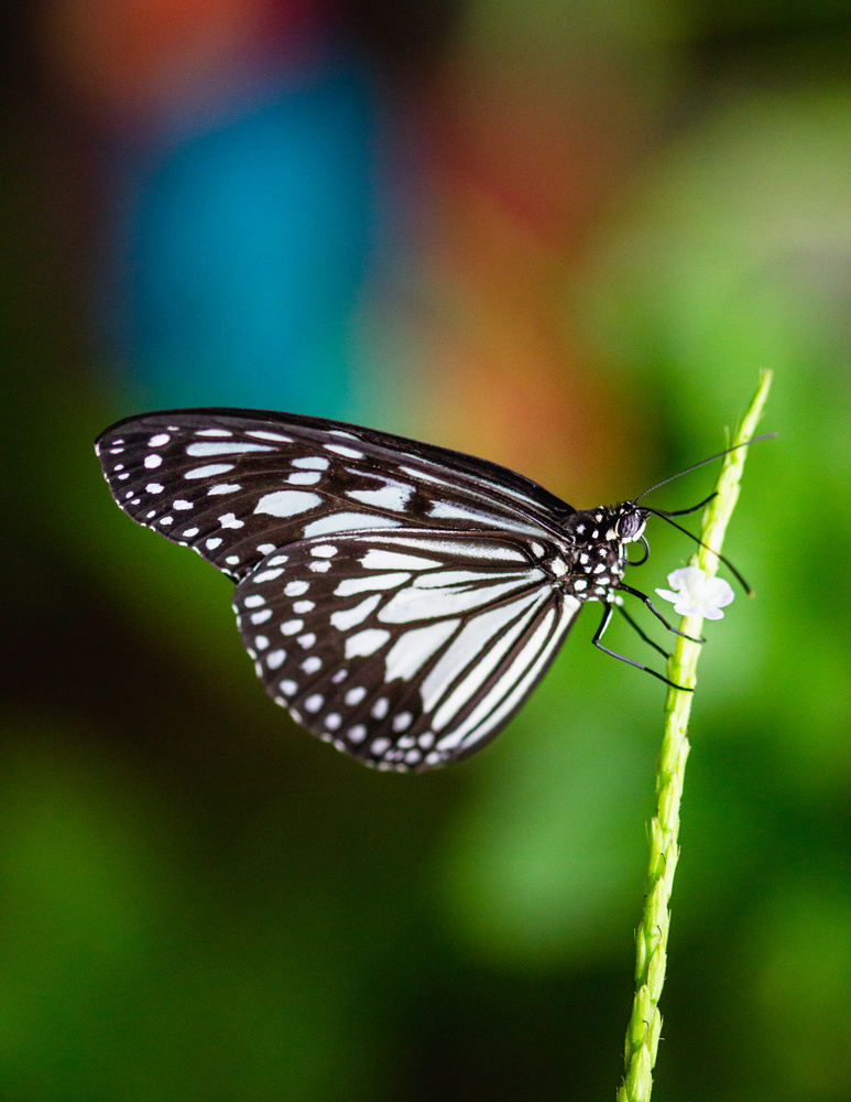 Butterfly close-up by Joel Santos