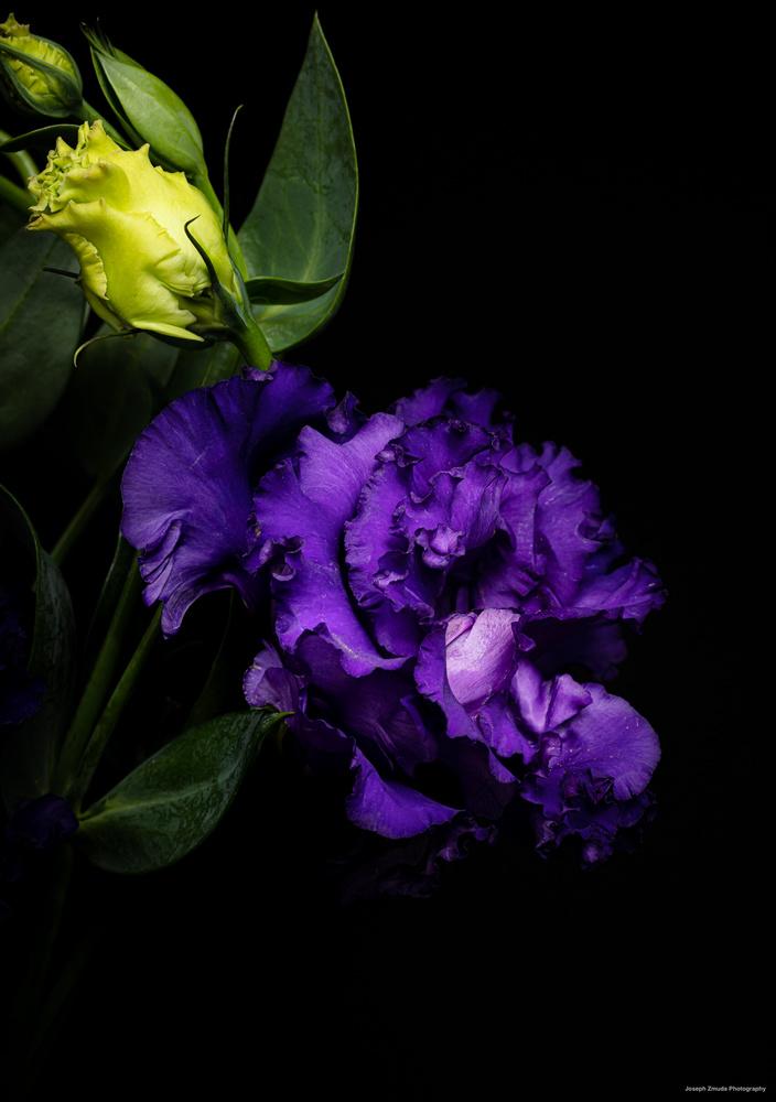 Ruffled Petals by joseph zmuda