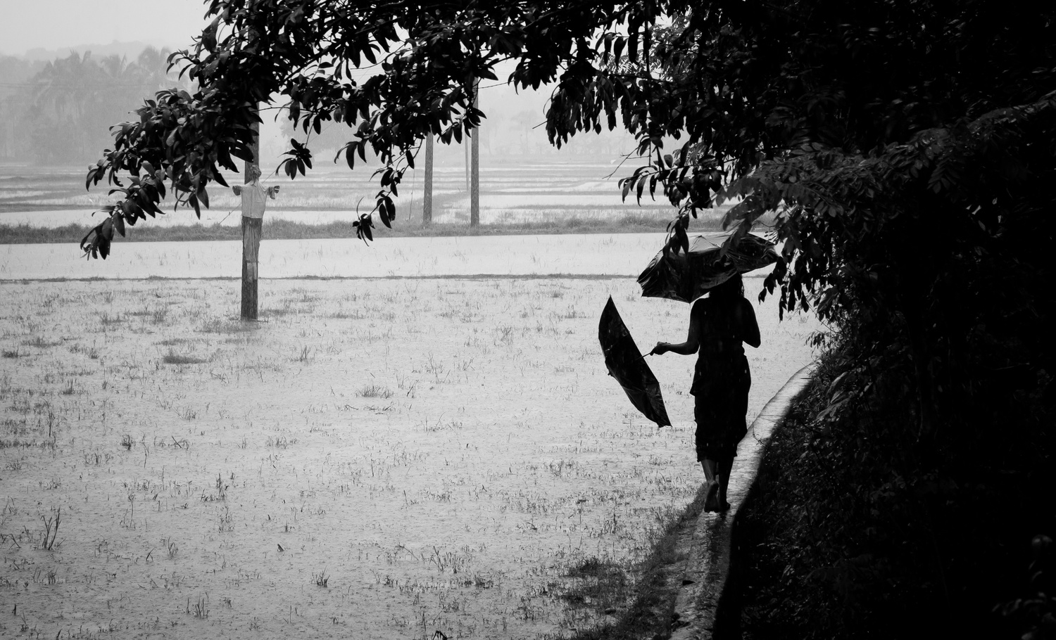 Two umbrellas. by Meghal Sivan