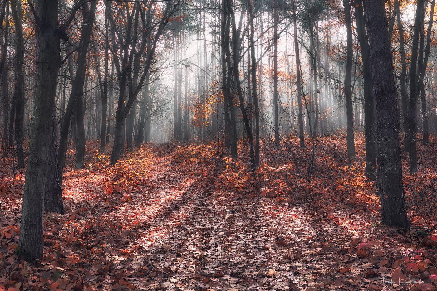 Magical morning by Rafal Kani