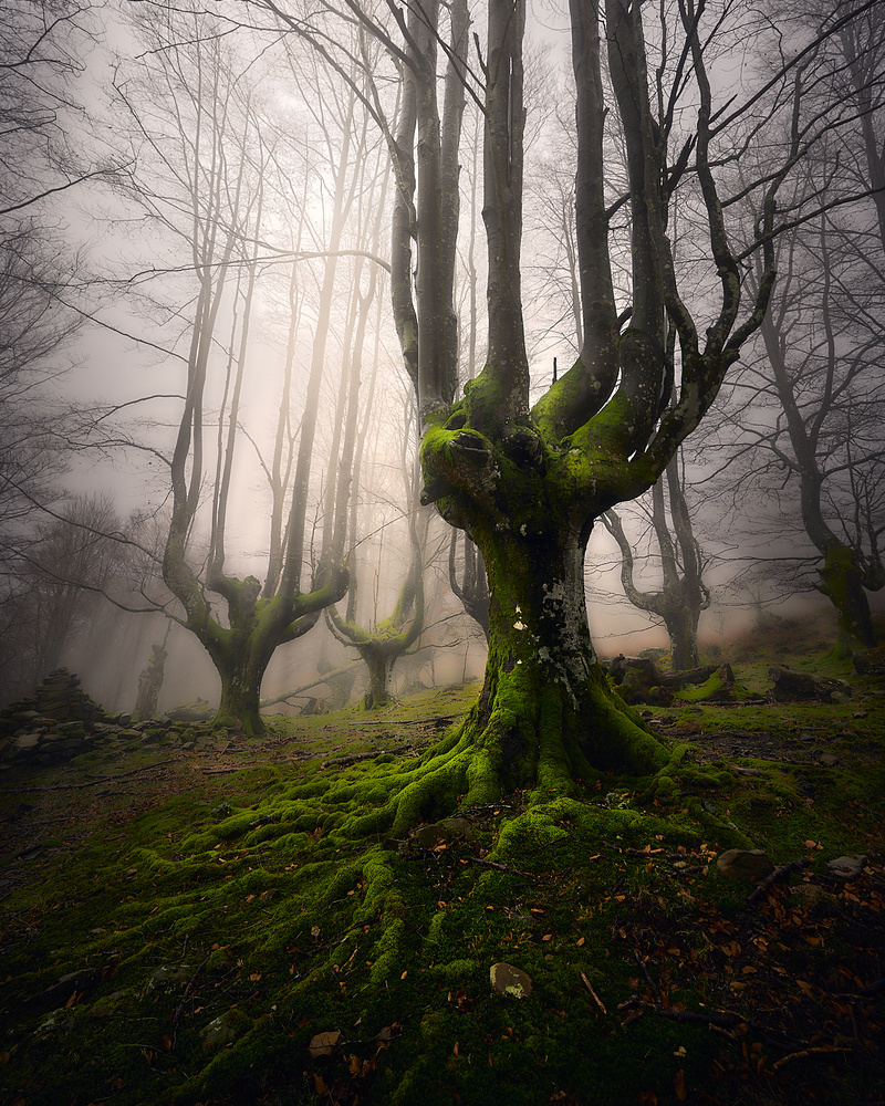 Enchanted Forest by Jon Zumalabe