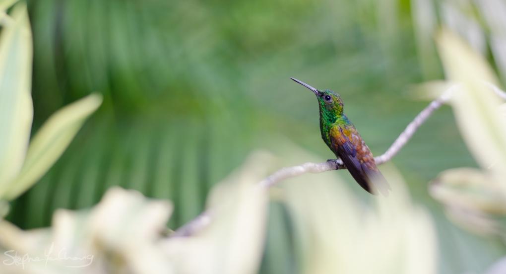 Emerald Beauty by Stephen Yen Chong