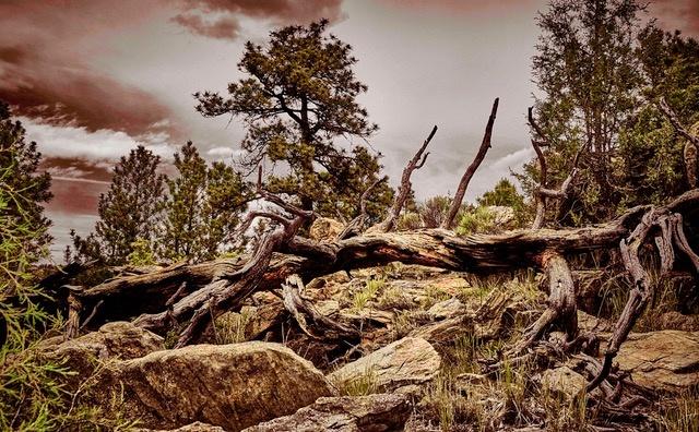 Rocky Deadwood by Mark Mathews