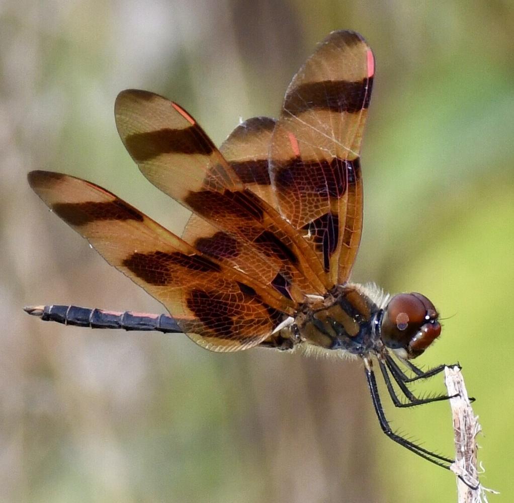 Dragonfly by T. Craig Hyder