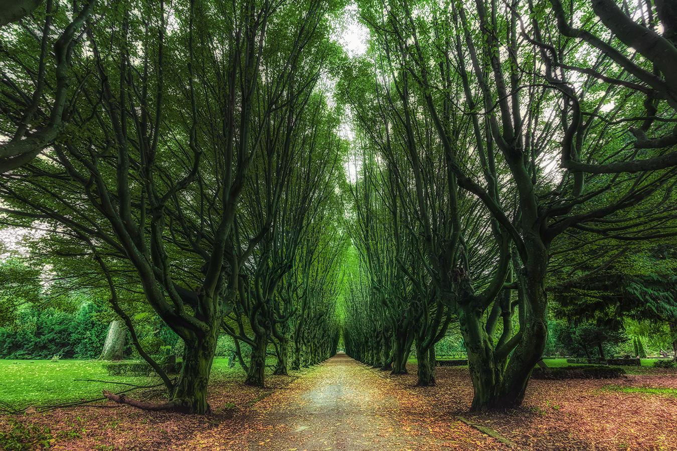 Trees Ally by Hanaa Turkistani