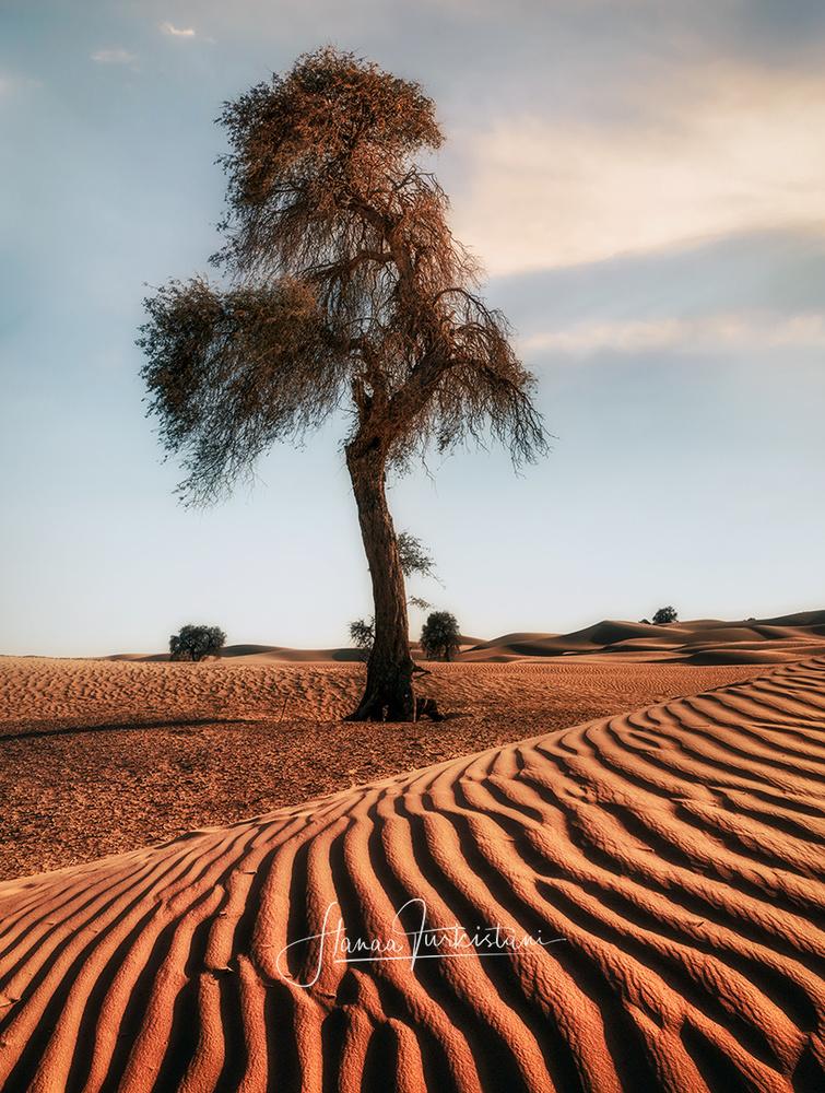 The tree by Hanaa Turkistani