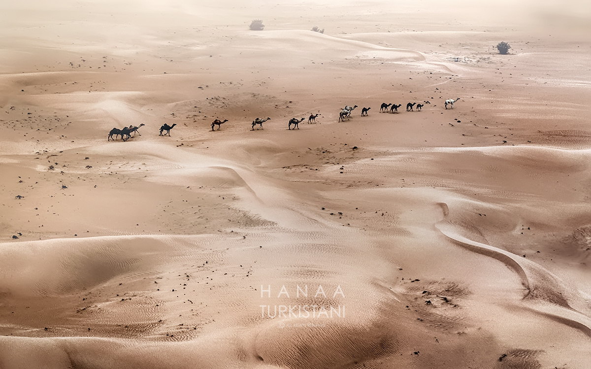 Camels by Hanaa Turkistani