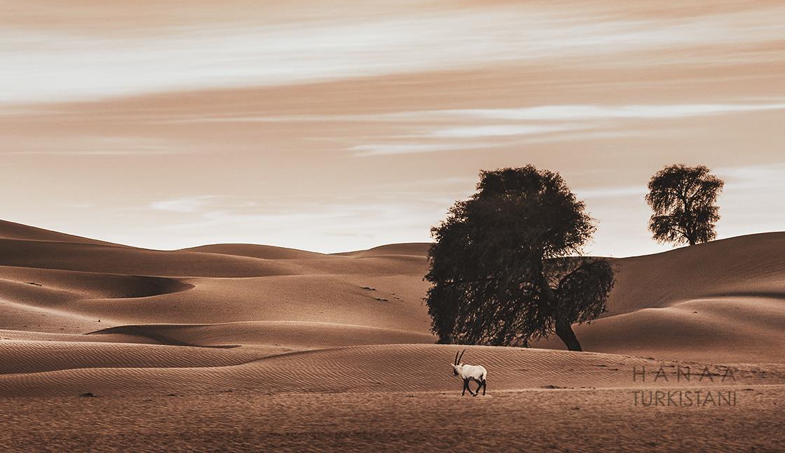 the 3 elements by Hanaa Turkistani