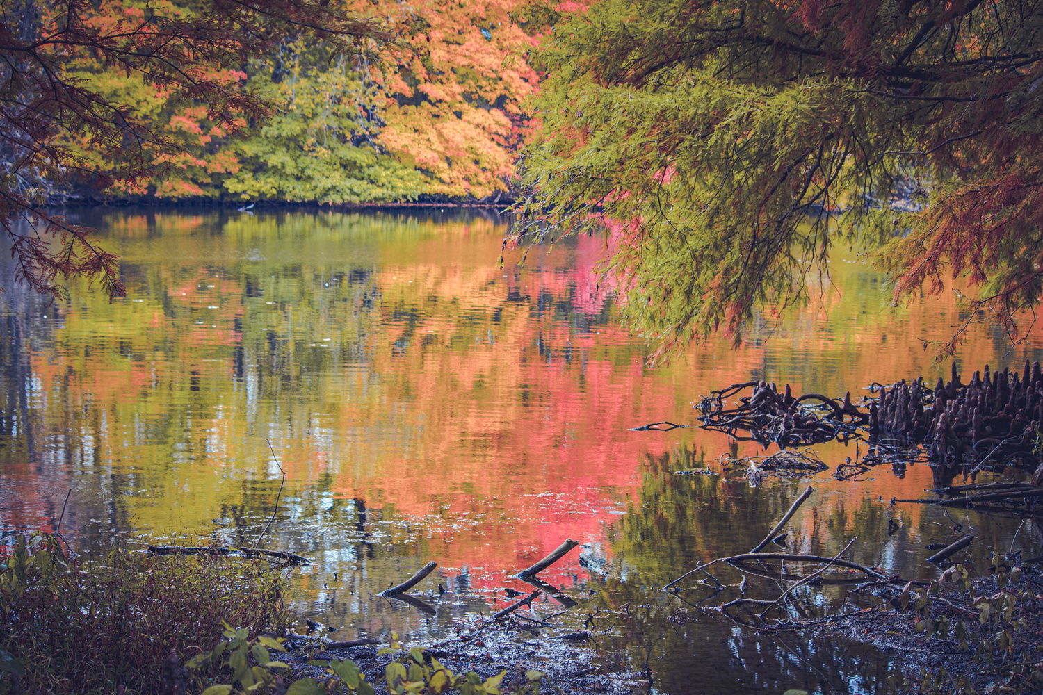 Cougar Lake In Fall by Alison Pascal