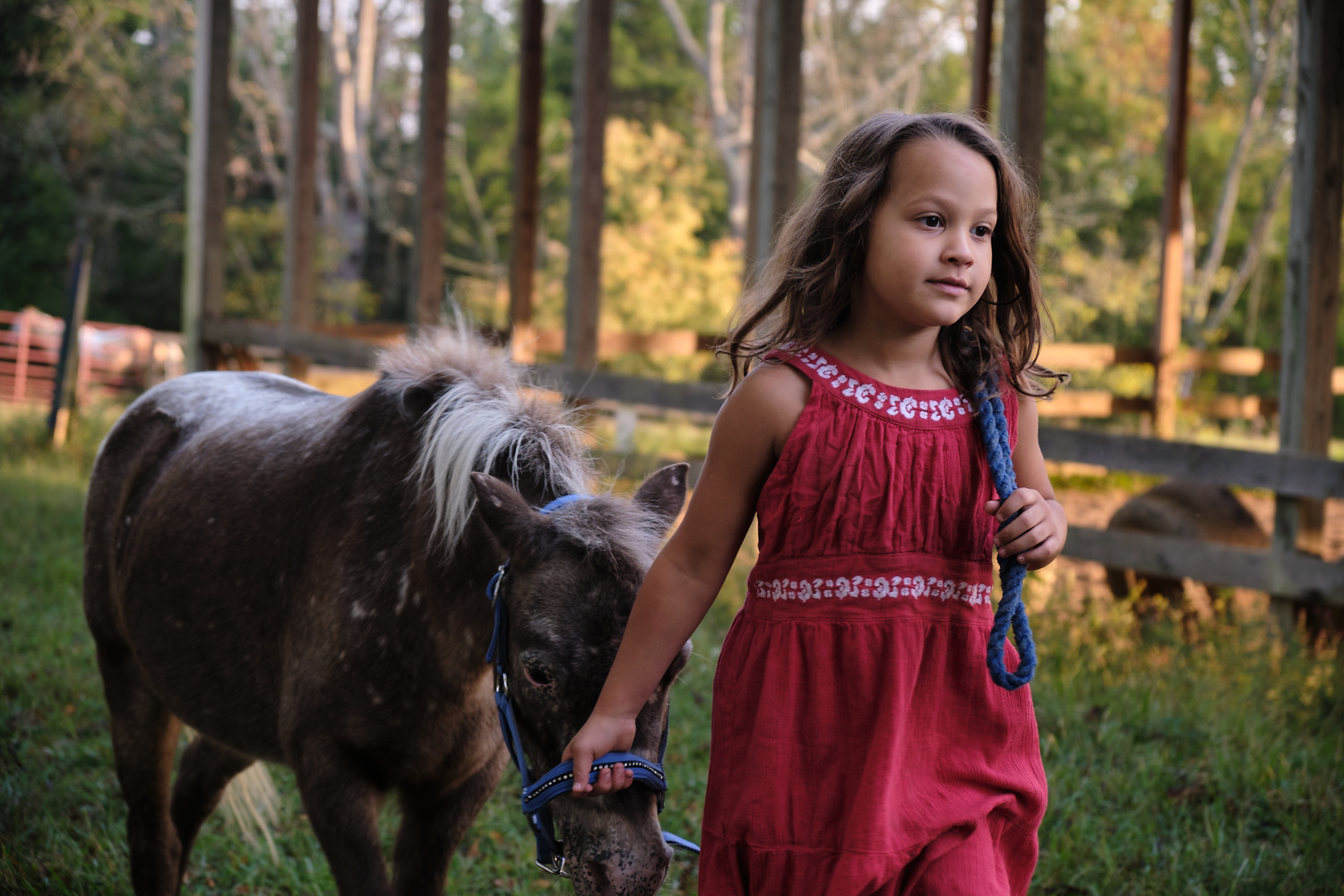 A girl and her Horse by David Patton