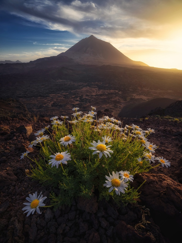 Enjoying the light at Teide National Park by Efren Yanes