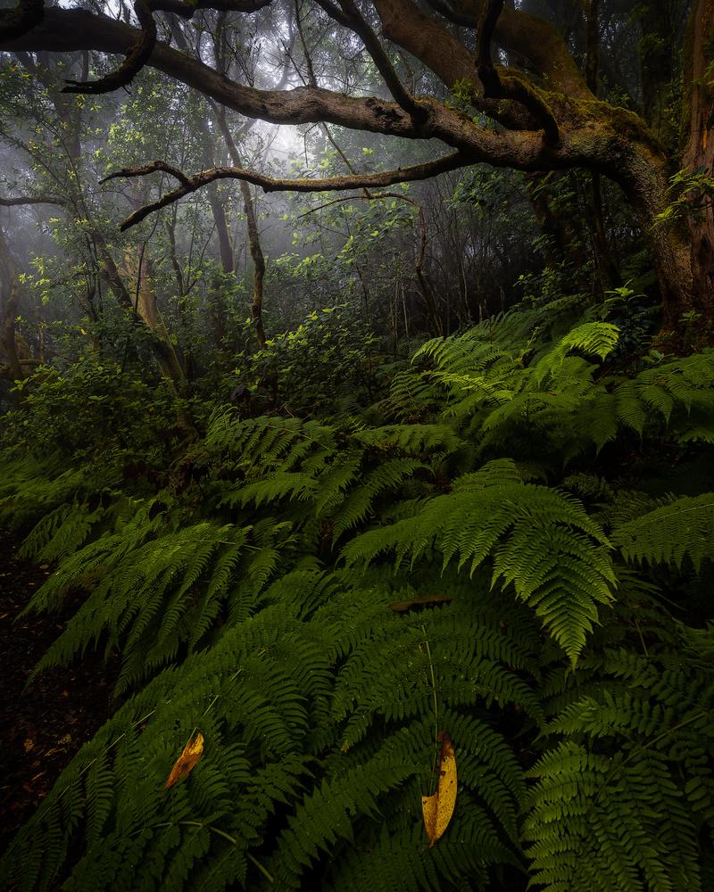 Jurassic Forest by Efren Yanes
