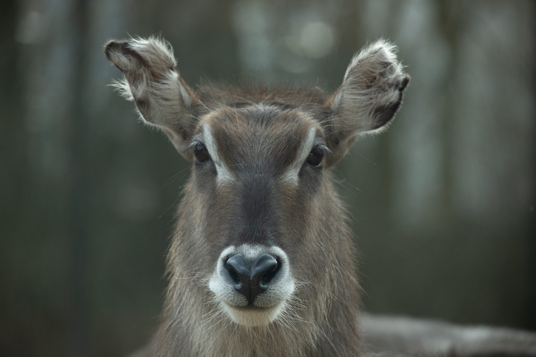Animal Portrait by Sebastian Dannenberg