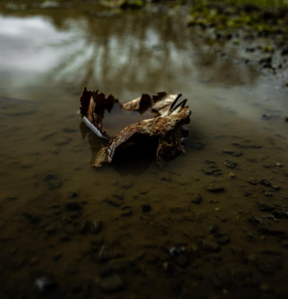 Leave by Sebastian Dannenberg