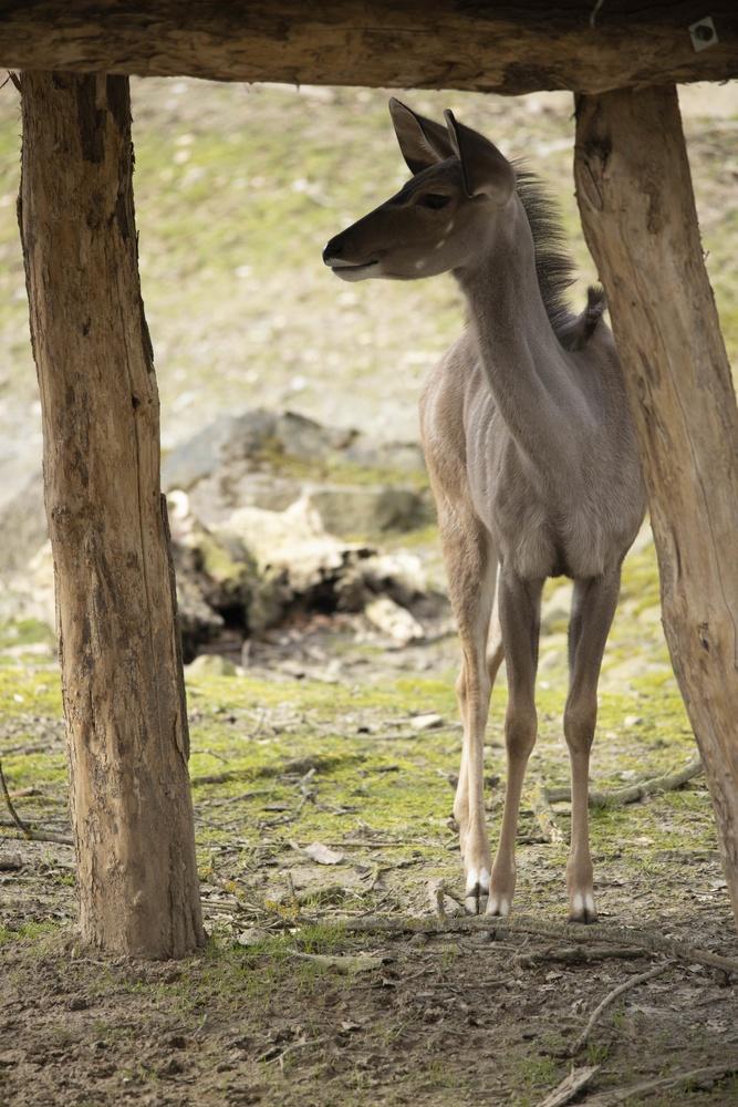 Deer by Sebastian Dannenberg