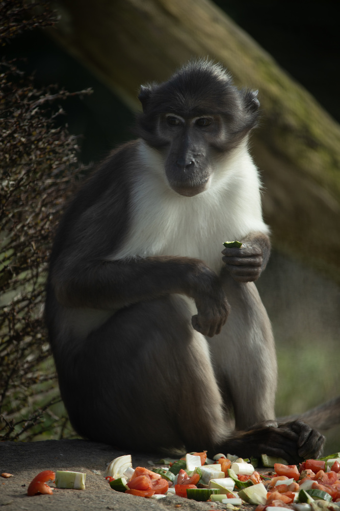 Monkey by Sebastian Dannenberg