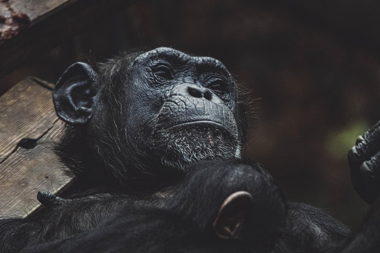 Monkey mama by Sebastian Dannenberg