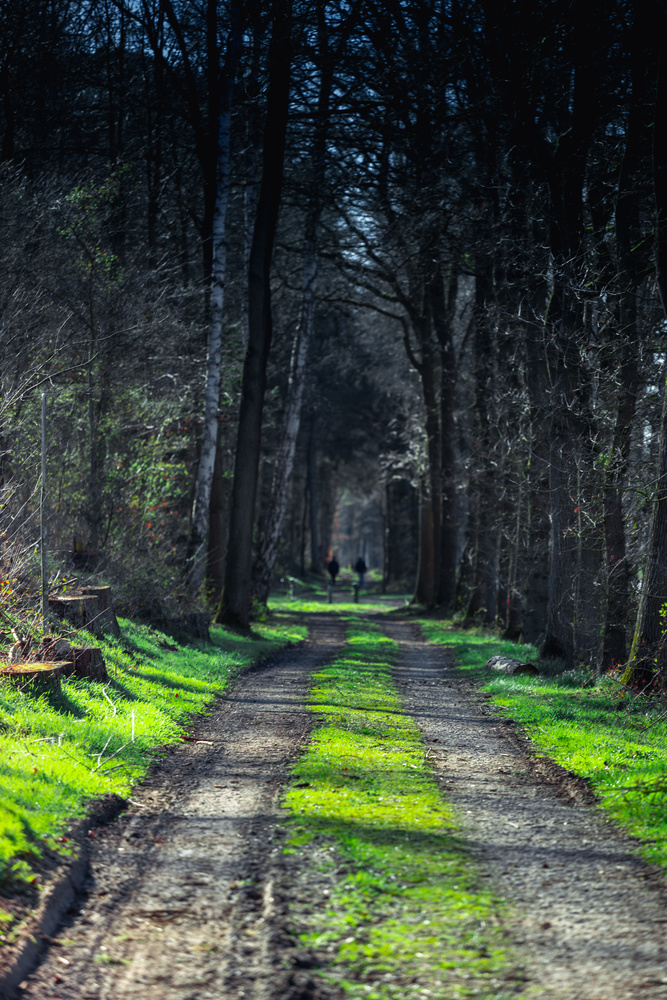 Through the Forest by Sebastian Dannenberg