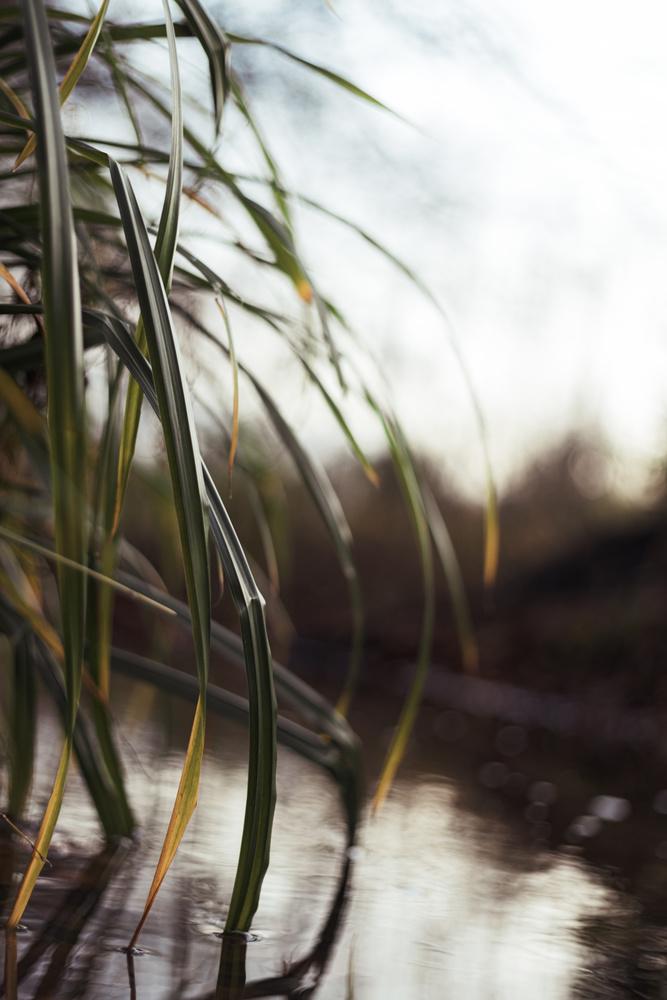 River Plants by Sebastian Dannenberg