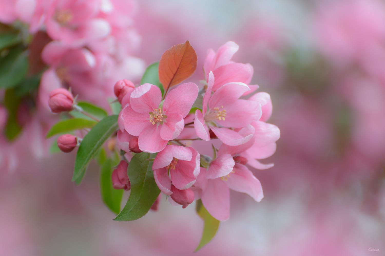 Spring by Sandeep Nigam