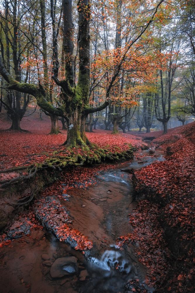 Basque autumn by Eneko Guerra