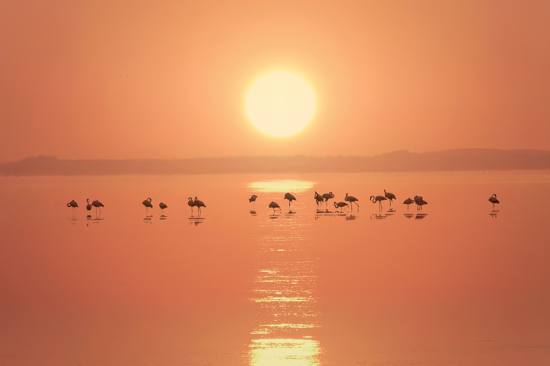 Orange dreams by Eneko Guerra