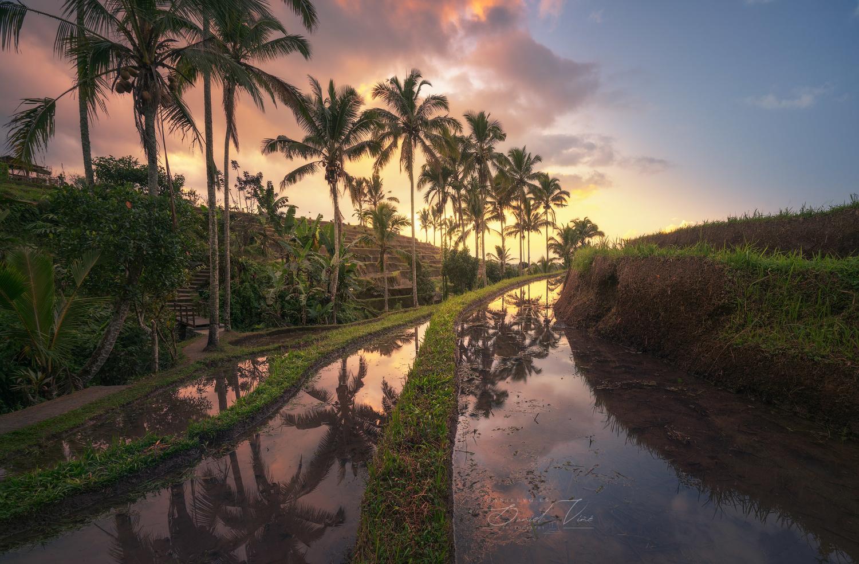 Rice field of Bali by Daniel Viñé