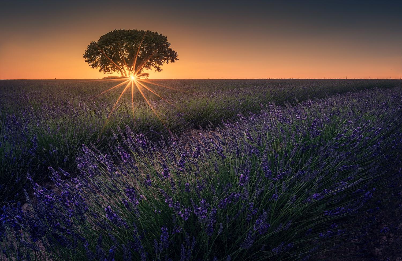 Last rays of sun by Daniel Viñé