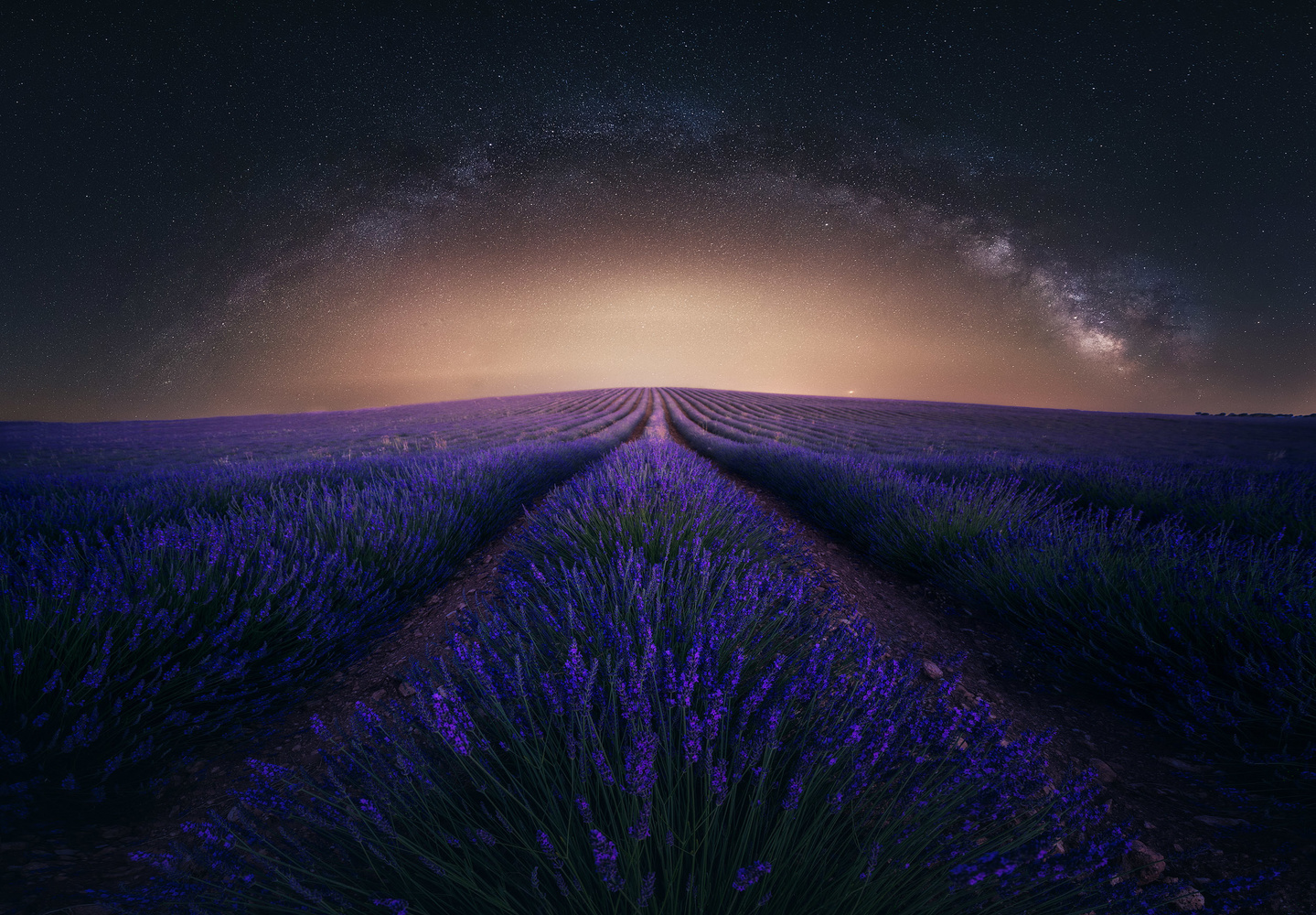 Lavender Fields by Daniel Viñé