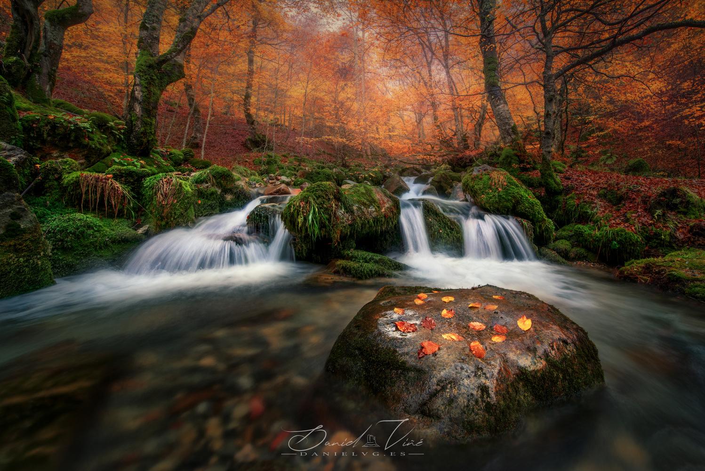 Autumn Forest by Daniel Viñé