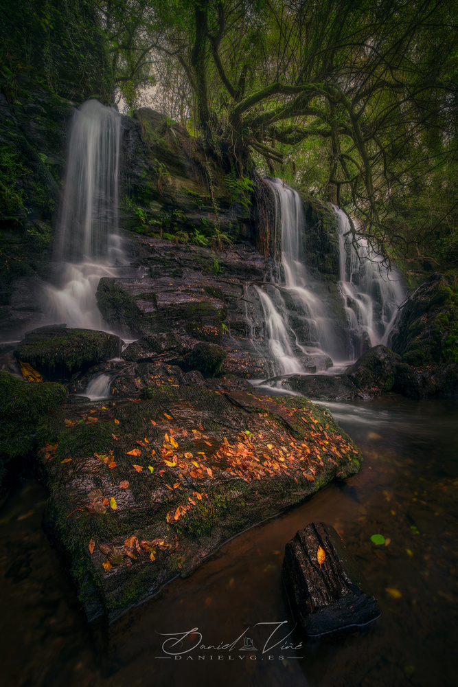 The Magic Forest by Daniel Viñé