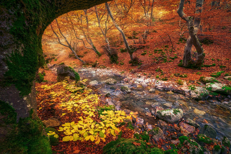The Forest by Daniel Viñé