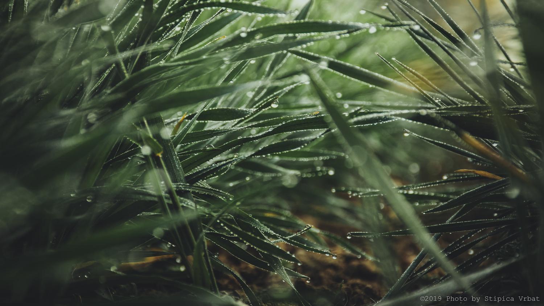 Greenish by Stipica Vrbat