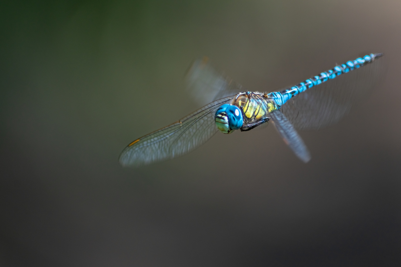 Dragonfly by Stipica Vrbat