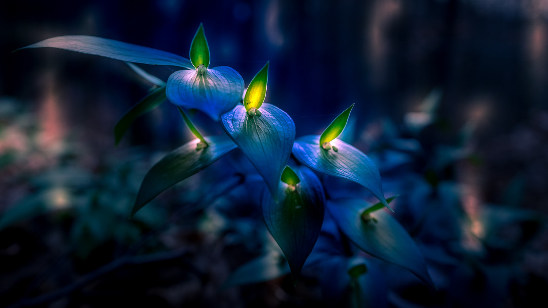 Blue Lagoon by Stipica Vrbat