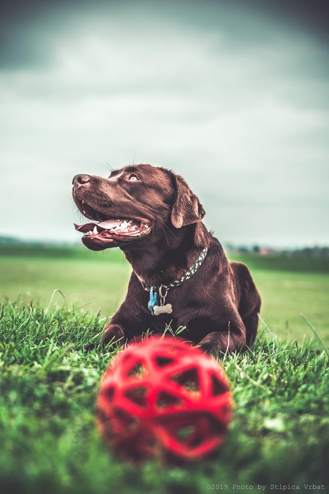 Dog by Stipica Vrbat