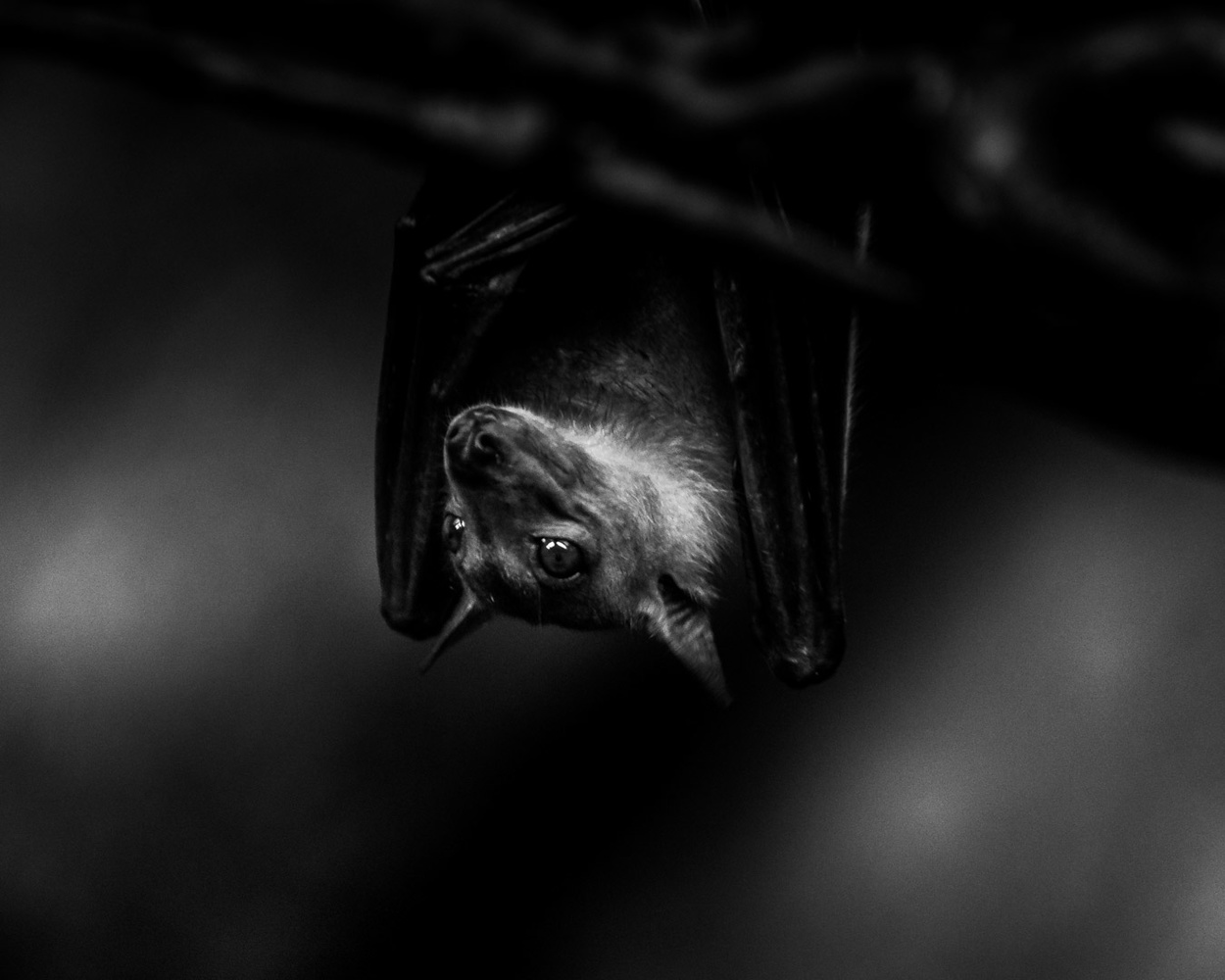Bat by Mike Esparza