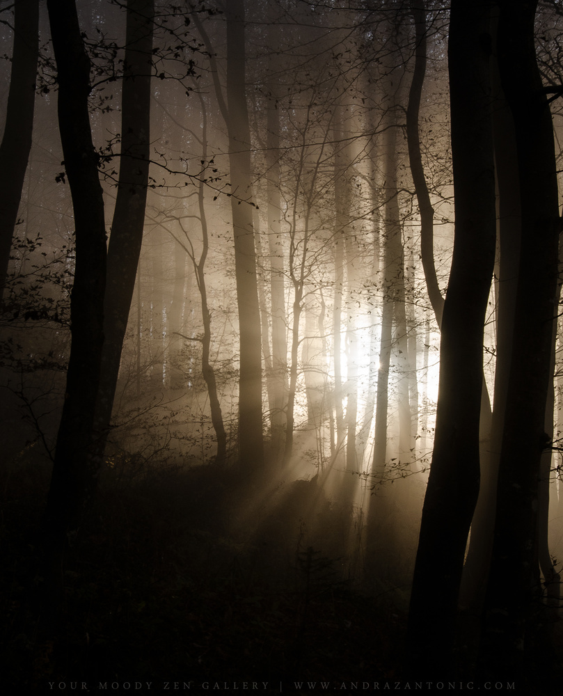 Lisca fog by Andraz Antonic