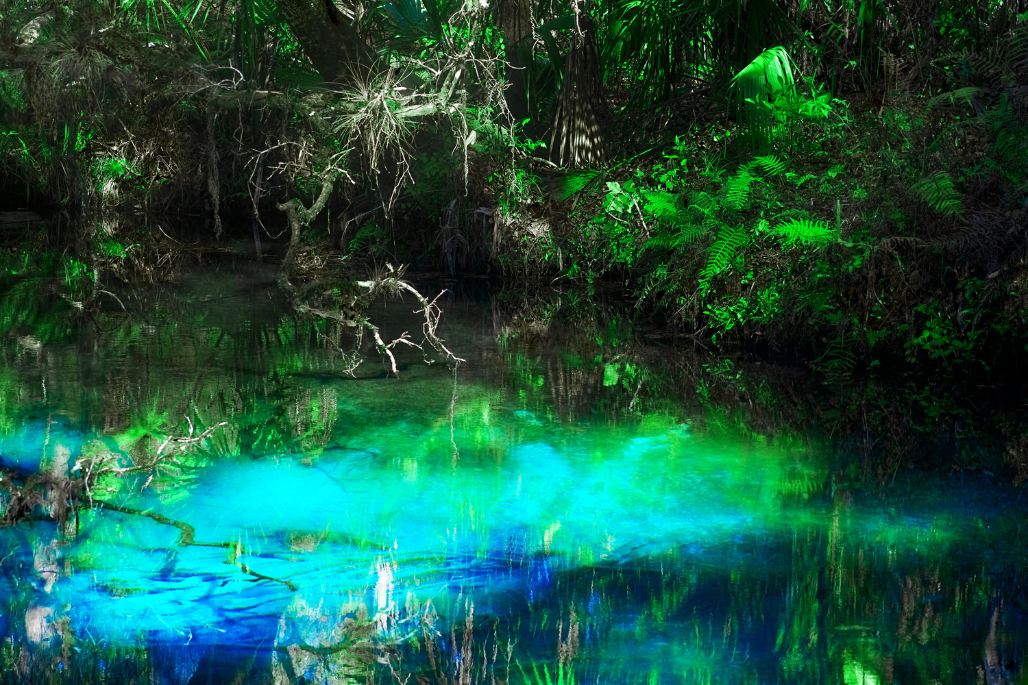 Reflections at Juniper Springs by Tong Thao