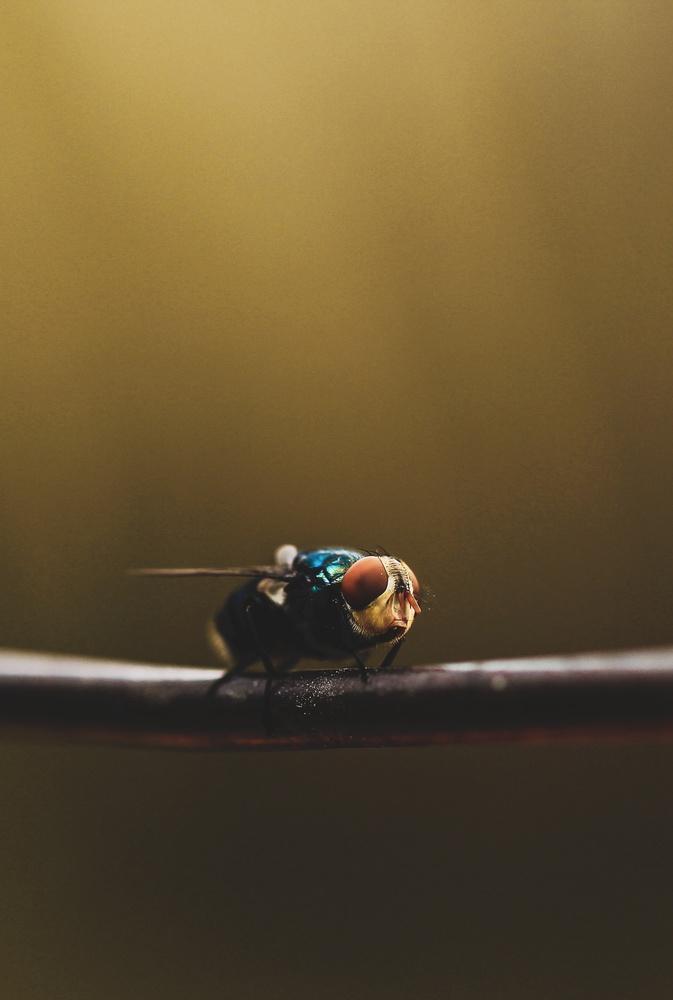 The fly by Dhruv Krishan agarwal