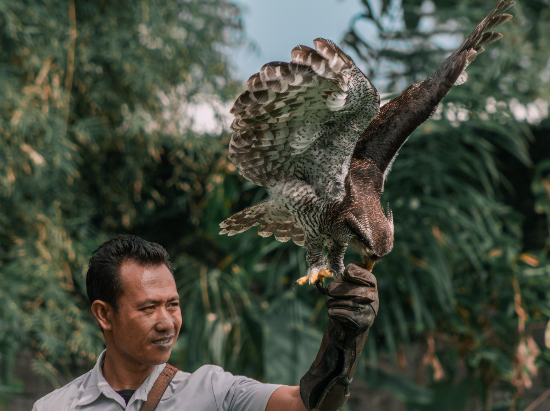 Training the Predator by Ghazali Jazali