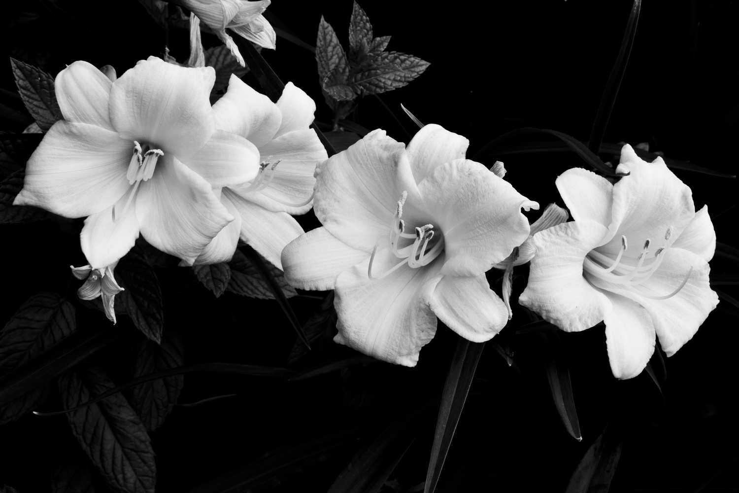 Lilies by James Jewers