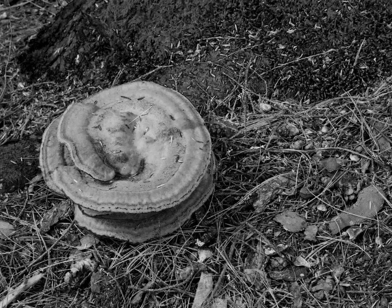 Large Swirl Mushroom by James Jewers