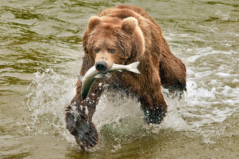 The Catch. Alaska by Roman Golubenko