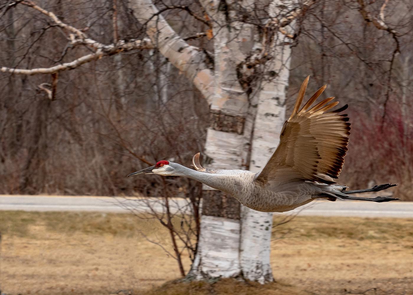 Flight of the Crane by Andy Marek