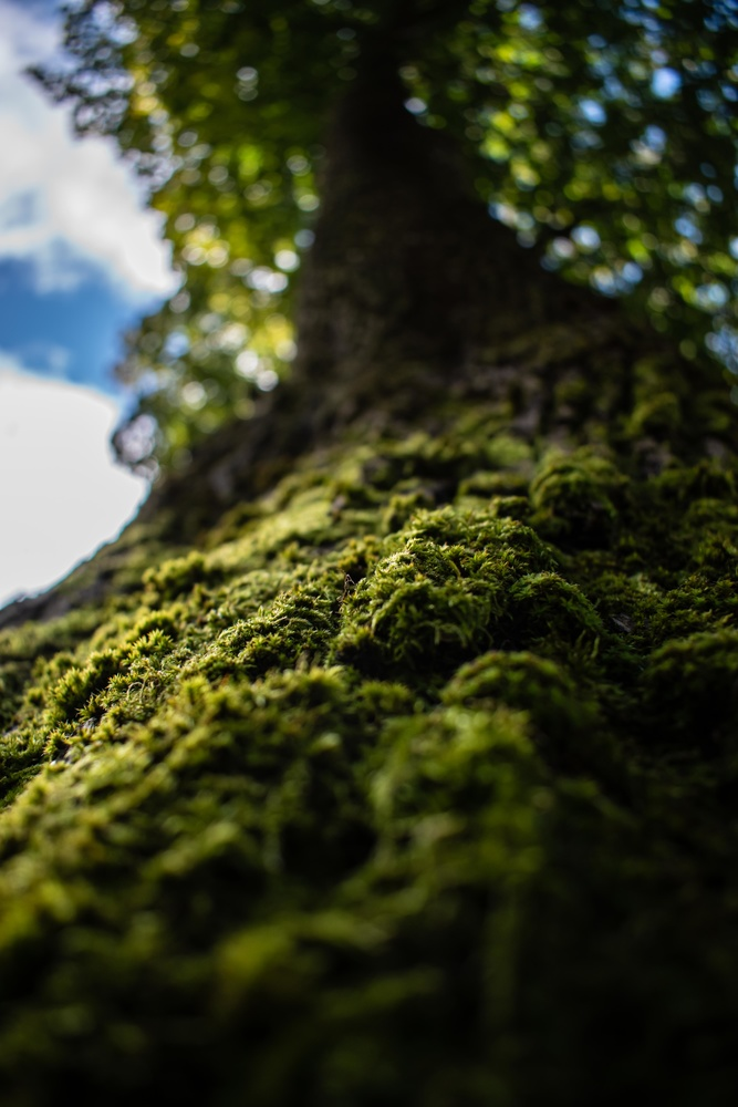 detailed image of moss by Anton Sköld
