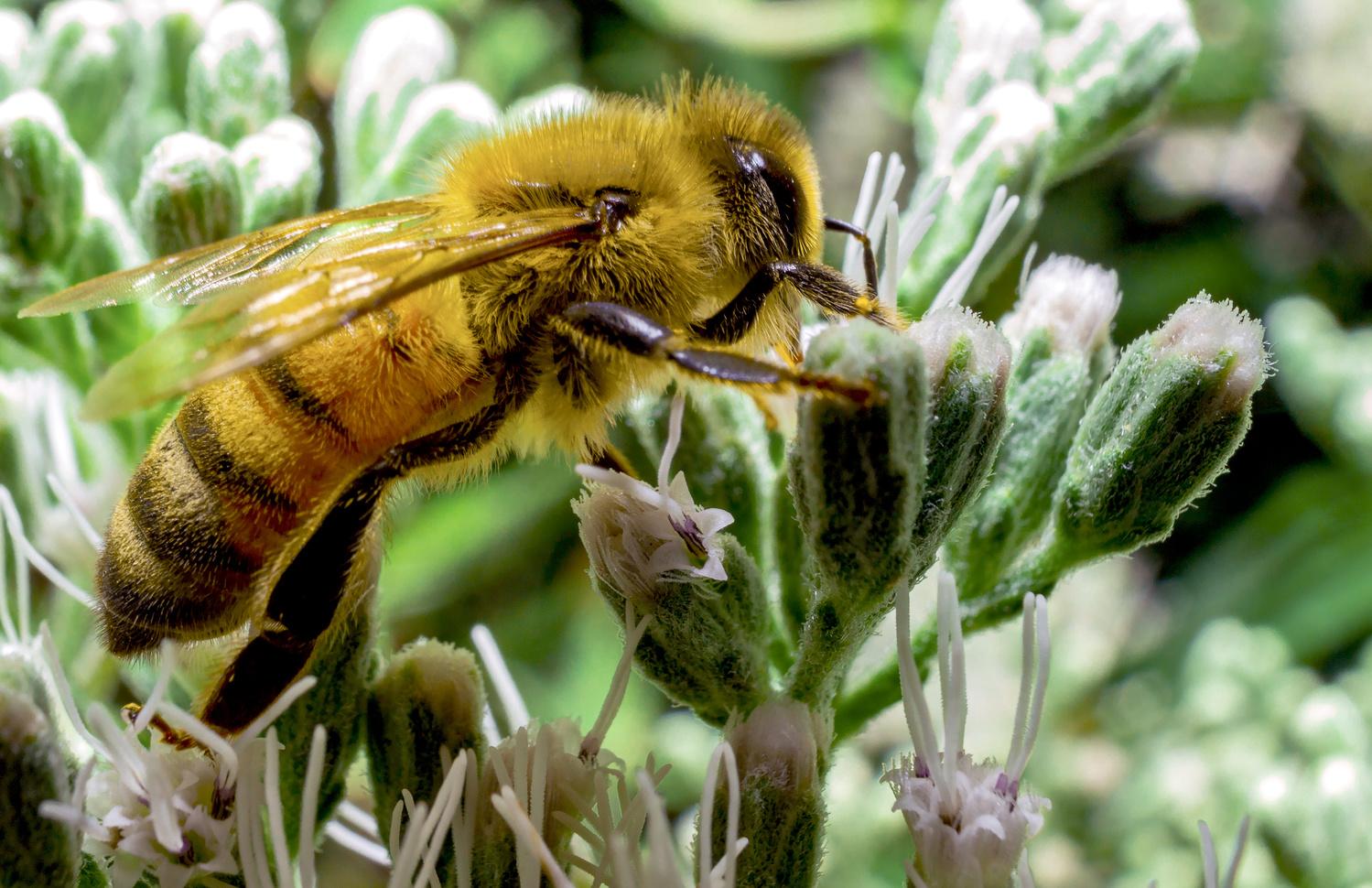 Eric the 1/2 a Bee by Robert Felker