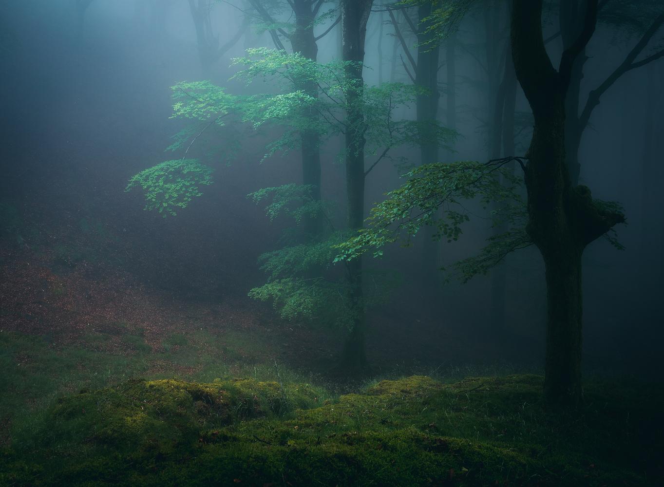 Forest glade by Daniel Martin